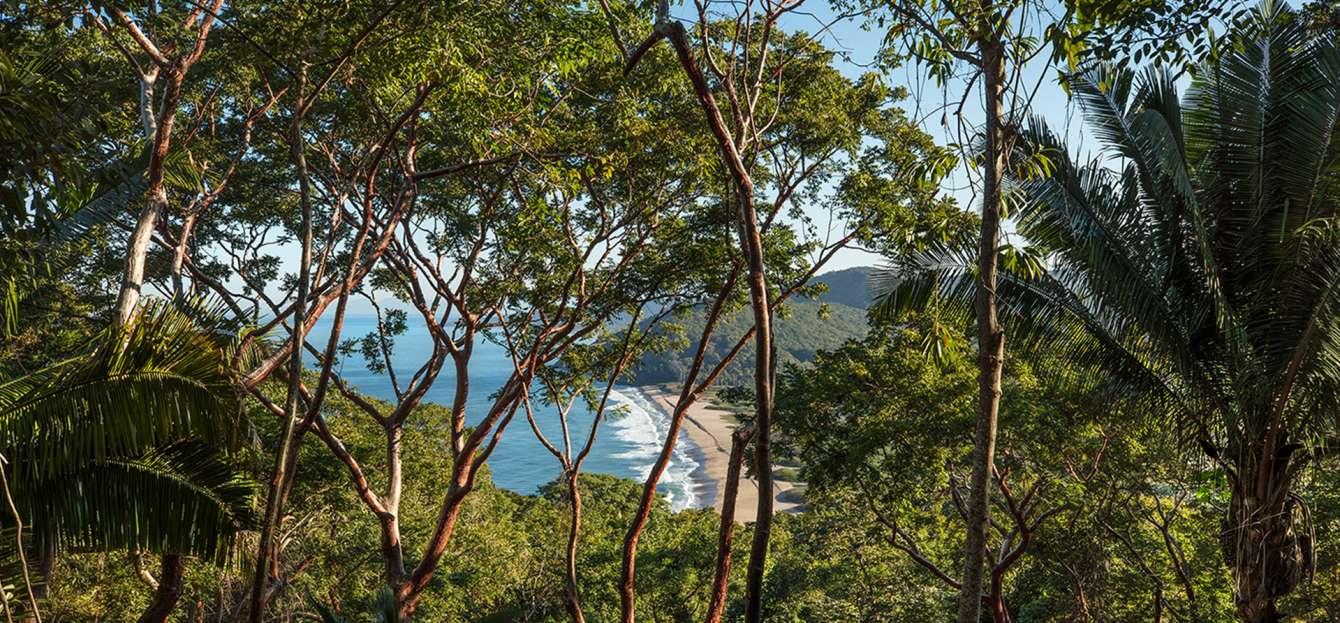 treetop-ocean-view